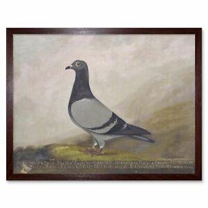 Brown Wooden Framed Art Print - Pigeon/Dove,  Brand New