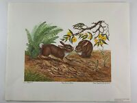 """Anne Worsham Richardson """"Young Cottontail Rabbits"""" Signed Print 1356/3000  1981"""