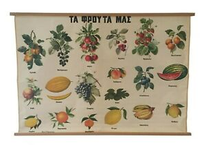 Vintage Botanical Pull Down Chart, Fruits and Berries Chart, School Chart, Map