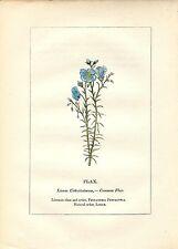 Stampa antica PIANTE DELLA BIBBIA LINO Linum 1842 Old antique print
