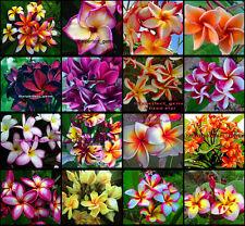 "Plumeria/Plants/Flowers/""Mixed 16 Types"" Fresh 55 Seeds!!"