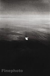 1974 Vintage JEANLOUP SIEFF Switzerland White SWAN Lake Bird Photo Art 11x14