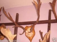 Mounted Fallow Deer Antlers Trophy Art Crafts Home Decor Taxidermy Skull