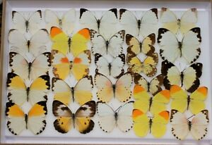 Stunning box of mixed African whites