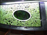 Floating Plant rings , Aquarium feeding feeder rings, sizes, shapes & colours