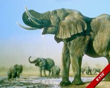 WILD AFRICAN ELEPHANTS DRINKING WATER PAINTING AFRICA ART REAL CANVAS PRINT