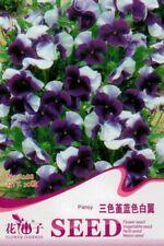 Original Package 30 Pansy Blue Wings Seeds Viola tricolor Beautiful Flower A288