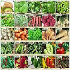 Hybrid Vegetable Seeds Combo Kit * for Kitchen/Terrace Gardening 16 Rare Items