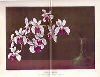 1900s Antique Vanda Orchid Vase Flower Chromolithograph Botanical Art Print