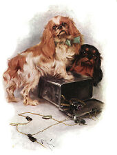 KING CHARLES TOY SPANIEL CHARMING DOG GREETINGS NOTE CARD DOGS WITH JEWEL BOX