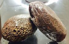 2 Piedras Poma Volcanic Lava Pumice Stone Foot Scrub Exfoliate Pedicure Grinding