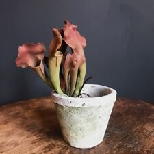 Artificial Sarracenia Trumpet Pitcher Plant w Roots Realistic Faux Houseplant