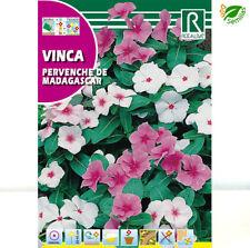 25 graines PERVENCHE DE MADAGASCAR Mélange Catharanthus Roseus G472 SEEDS SAMEN
