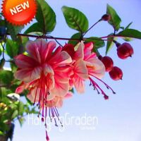 Multicolor Pink Double Petals Fuchsia Seeds Potted Flower Seeds Plants Hanging F