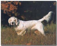 English Setter Dog Pet Wildlife Animal Wall Decor Art Print Picture (8x10)