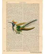 Horned Sungem Hummingbird Art Print on Antique Book Page Vintage Illust Birds