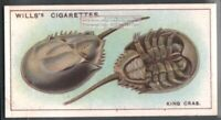 King Crab c90 Y/O Trade Ad Card