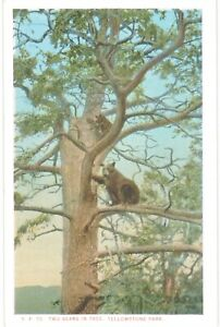Haynes Yellowstone Two Bears In Tree Unused 1930 National Parks