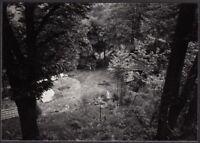 YZ0212 Dintorni di Giaveno - Vegetazione in collina - Fotografia d'epoca