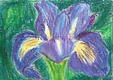 ACEO/ATC original watercolour painting - Iris
