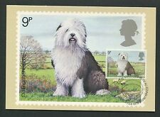 GB UK MK 1979 HUNDE DOGS SHEEPDOG CARTE MAXIMUM CARD MC CM d6278
