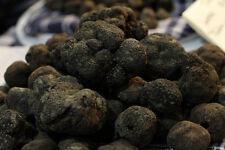 Fresh black truffles italian.Precious T.Uncinatum. 165g. 5,8oz. Mushrooms