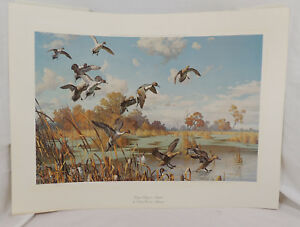 WINGED ELEGANCE PINTAILS by Harry Adamson Signed Numbered Print