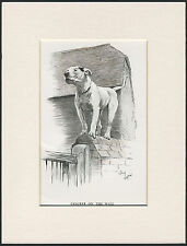 BULL TERRIER ON A WALL LOVELY OLD 1930'S CECIL ALDIN DOG PRINT READY MOUNTED
