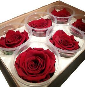 6 Stabilisierte, auf Glycerinbasis konservierte Rosenköpfe - Ewig haltbare Rosen
