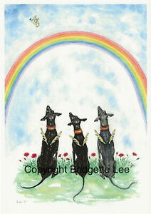 Whippet Greyhound  dog  lurcher Watercolour/ink Painting/print  by Bridgette Lee