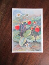 SMULTRON ( STRAWBERRY ), BY LEIF HOLMQVIST POSTCARD