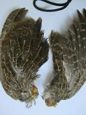 english partridge wings pair of flytying materials