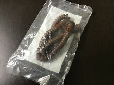 Western Electric Nos #104 Dark Brown Telephone Modular Spring Cord Long -Vintage