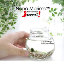 Nano Marimo Moss Ball x 15-Live Aquarium Plant co2 diffuser Fish Tank INV
