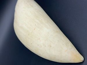 whale tooth,made plastic, copy 16 cm