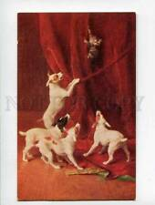 3052775 Cat & Jack Russell Terriers by Yo Laur old Lapin