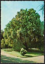 AD4393 Isola Madre (VB) - Giardini - Cartolina postale - Postcard