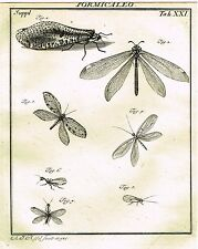 "Rosel's ""Insecten"" - Copper Engraving - ""FORMICALEO - PLATE XXI"" - 1740"