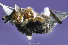 Keith Kimberlin: chaton Hamac-Maxi Poster 61 cm x 91,5 cm (new & sealed)