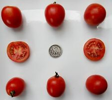 Northern Delight - Organic Heirloom Tomato Seeds - Very, Very Early - 40 Seeds