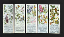 Cigarette/Trade/Cards.Typ hoo Tea.Wild Flowers In Their Families.1st.(1936).(Set)