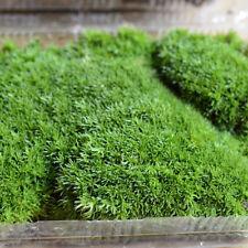 1X Mini Lichen Moss Emulation Lawn Garden Stakes Micro Landscape Decoration YA9