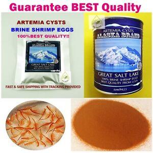 BEST Brine Shrimp Egg 50g. BEST Artemia Cysts ALASKA USA PREMIUM Quality 90%