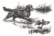 GOLDEN RETRIEVER - 1964 Dog Art Print - MATTED