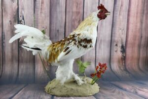 STUNNING REAL WHITE ROOSTER STUFFED NEW BIRD TAXIDERMY CABIN DECOR COCK