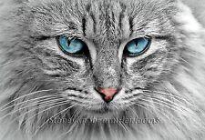 Mackerel Tabby Cat ~ Cats, Kittens ~ Counted Cross Stitch Pattern