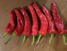 New Mexico Red Chilli Seed 10 seeds- Liveseeds -