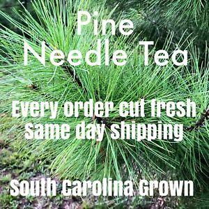 Eastern White Pine Needles For Tea Fresh Cut South Carolina Grown 1 Ounce