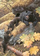 Carl Brenders Nosing Around, Black Bear Family, giclee canvas #4/95