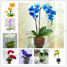 100 Pcs Seeds Orchid Flowers Bonsai Phalaenopsis Perennial Potted Plants Garden